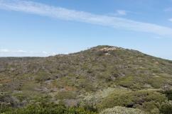 La végétation est dense et variée dans le parc.