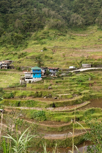 Les locaux vivent au milieu de leurs rizières.