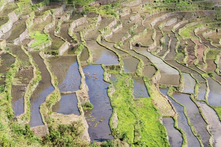 Les terrasses de Batad
