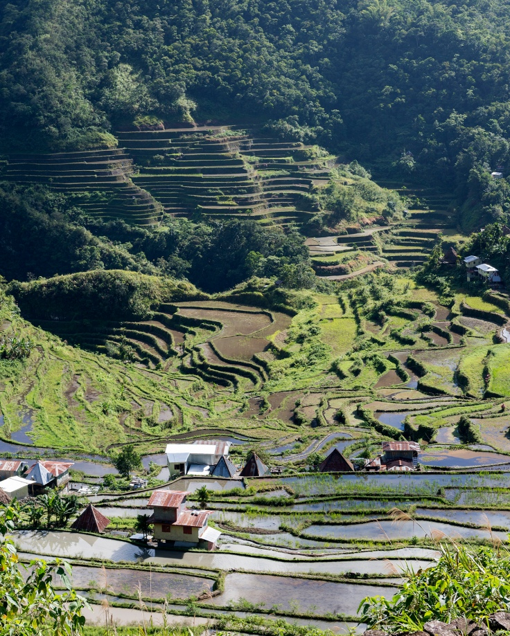Les rizières à flanc de montagne.
