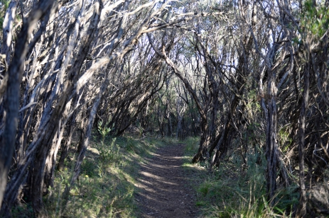 Marcher à travers les arbres.