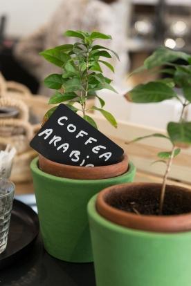 Le café, de la plante à la tasse.