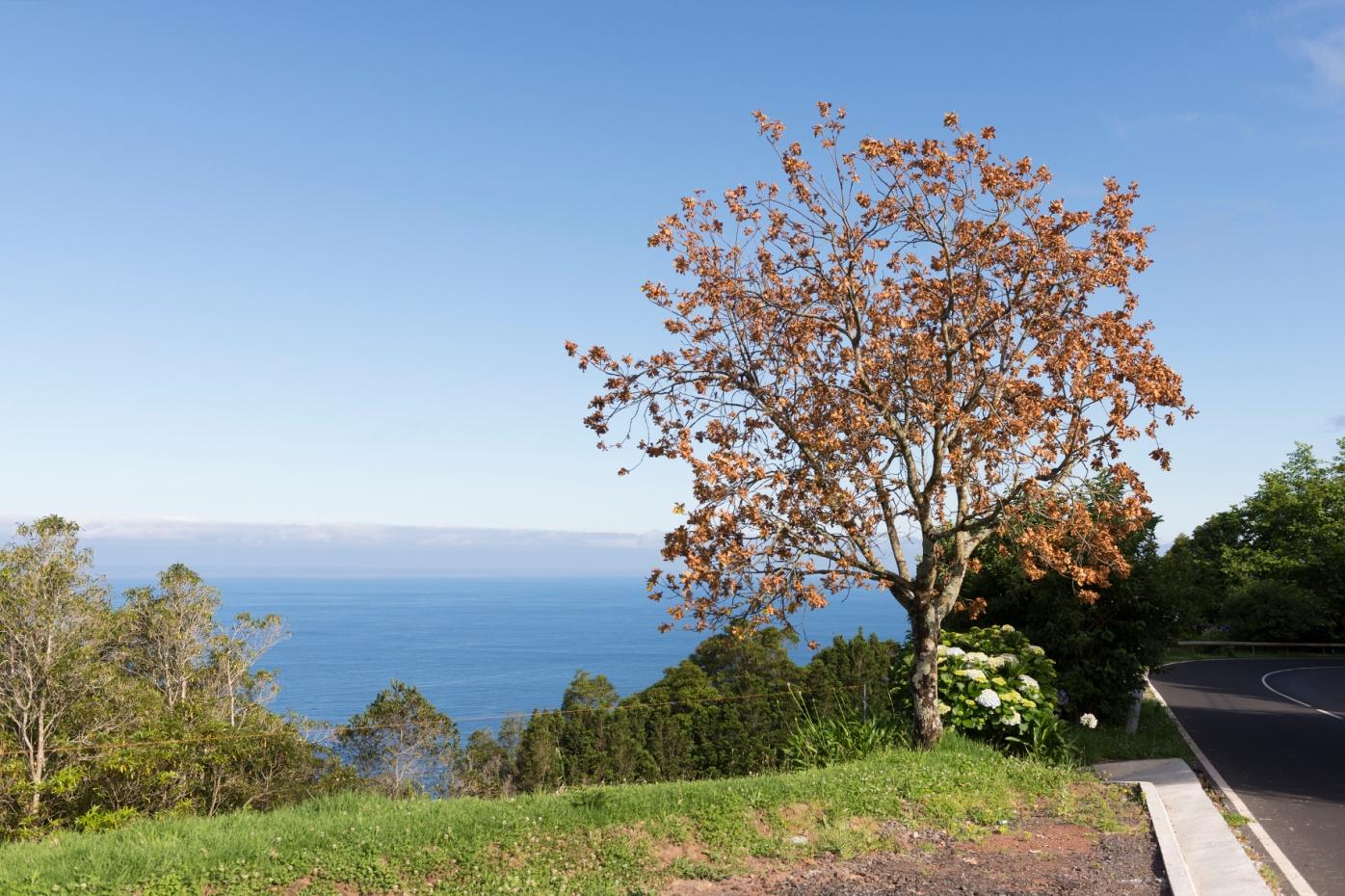 Au bord de la route, le sublime jardin de Ponta do Sossego surplombe la mer.