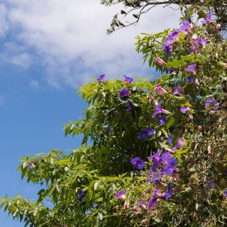 Levez les yeux, même le ciel est fleuri.