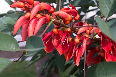 Il y a énormément de variétés de fleurs dans les Açores alors ouvrez l'oeil !