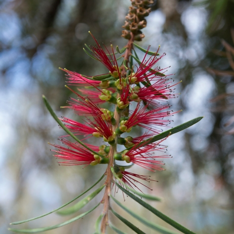 Une autre variété de fleurs près des plantations de thé à Maia.