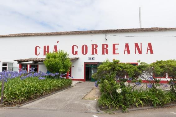 La fabrique de thé Chá Gorreana