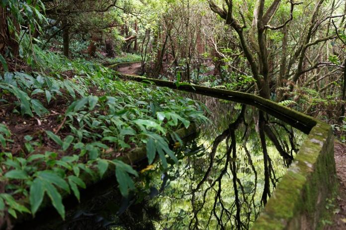 La randonnée qui mène au Lagoa do Fogo est très agréable. Le sentier est bien aménagé et traverse plusieurs zones bien distinctes.