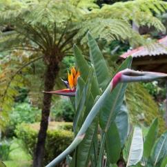 Le Jardin Botanique Ribeira do Guilherme.