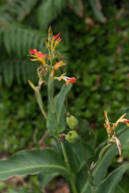 La flore de l'île est très variée.