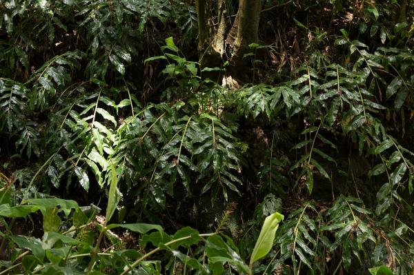 La végétation tropicale le long du chemin qui mène à la cascade Salto do Prego.