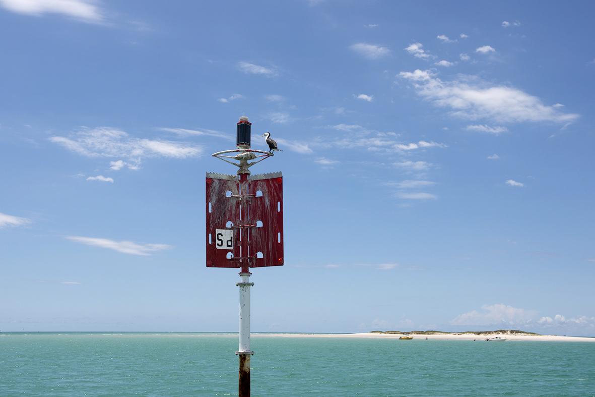 Photographie d'un oiseau devant une plage de sable blanc et la mer turquoise.