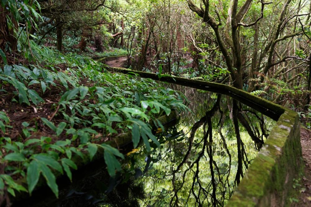 Photographie d'un reflet d'un arbre dans l'eau.