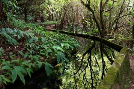 Sur le chemin du Lac du Feu dans les Açores.