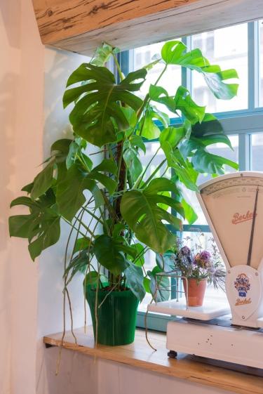 Déco végétale chez MINO.