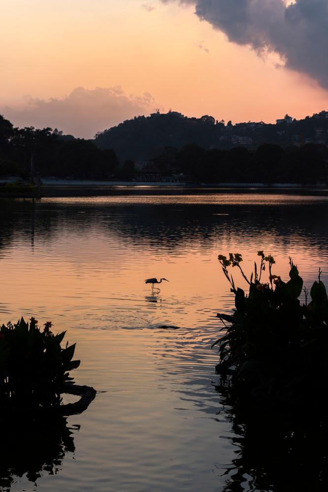 Photo d'un coucher de soleil rosé sur un lac avec la silhouette d'un oiseau à contre jour.