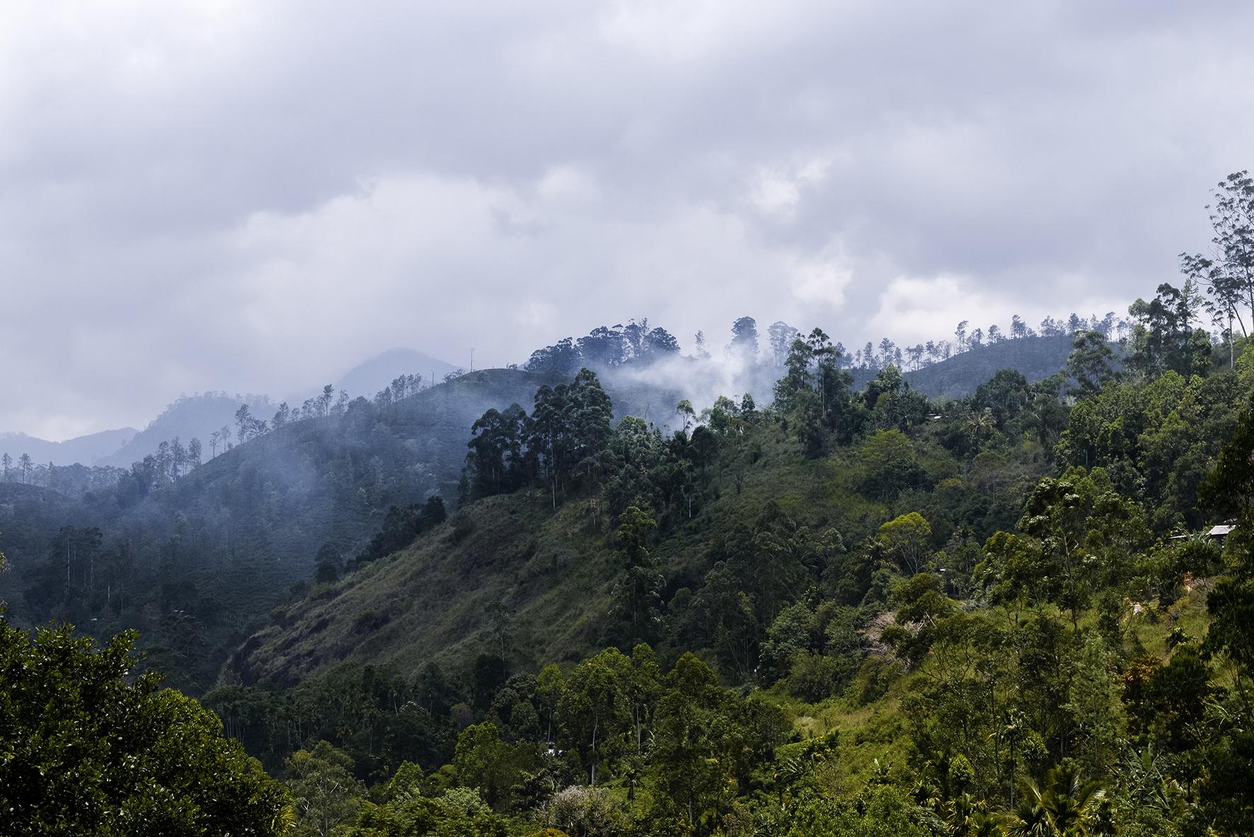 Photo d'un paysage de jungle au Sri Lanka.