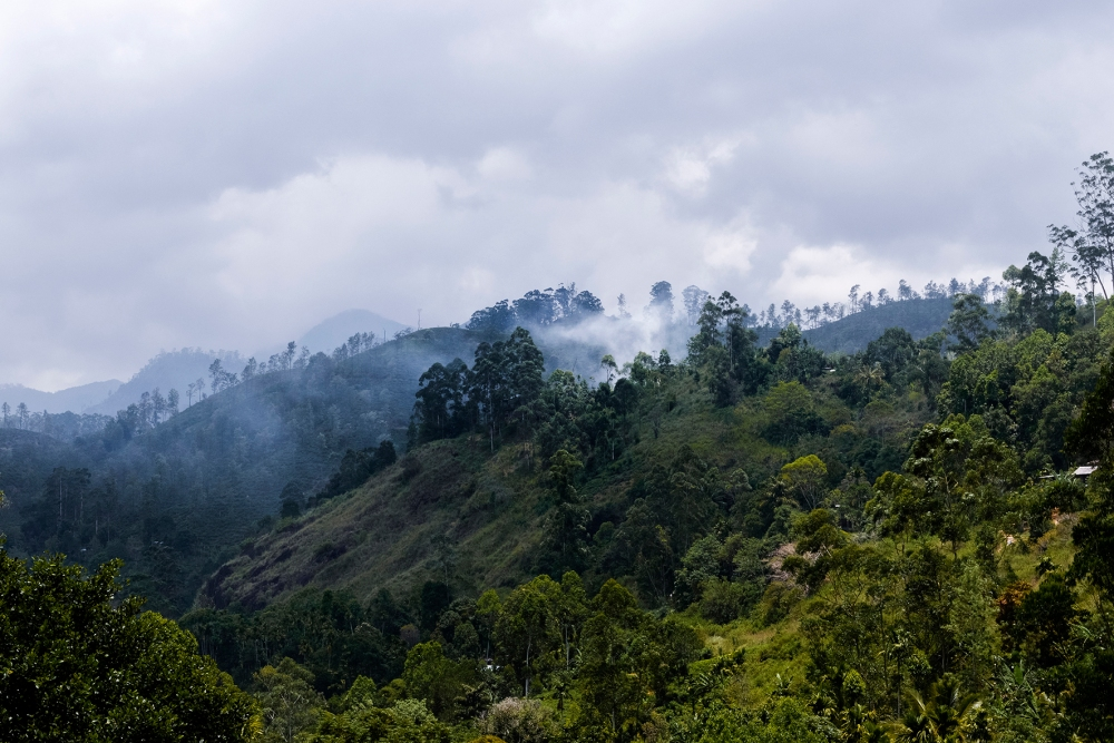Photo d'un paysage de jungle au Sri Lanka.