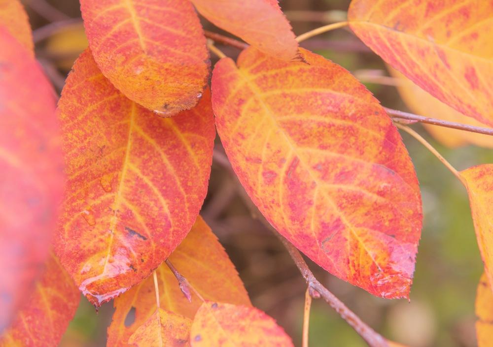 Photo en gros plan sur des feuilles colorées en automne.