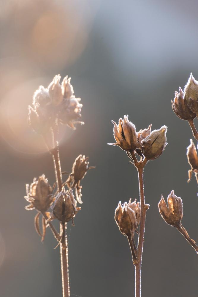Photographie de face de fleurs fanées en automne.