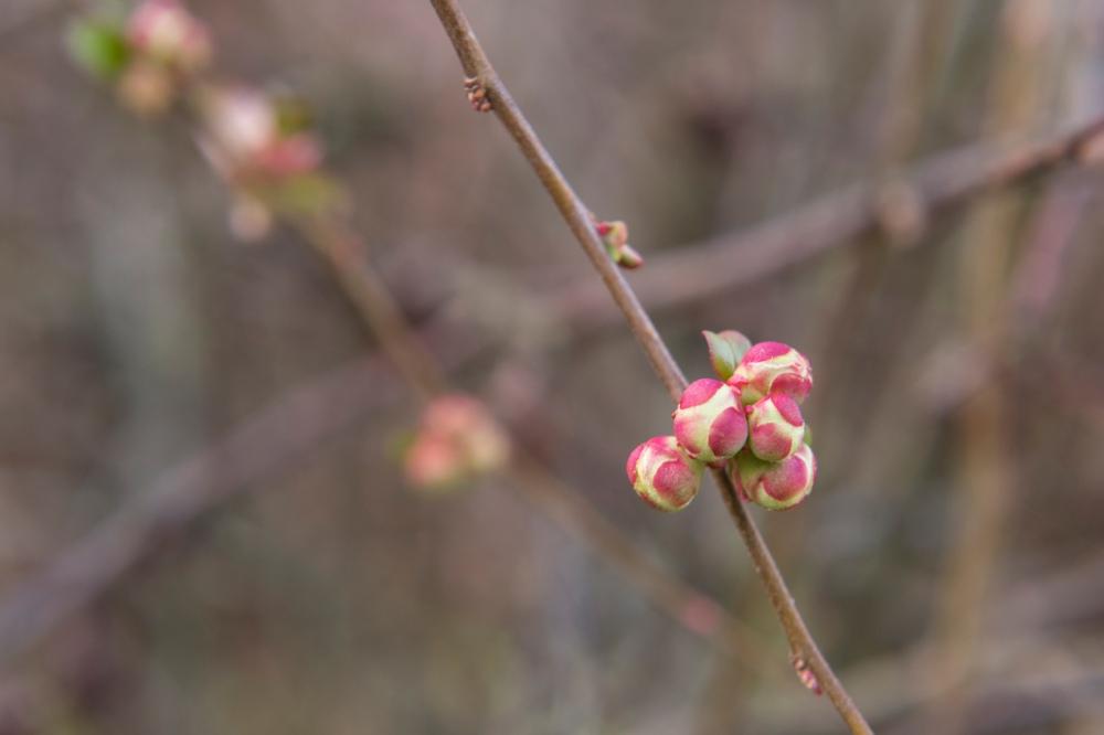 Photo de face en gros plan d'une branche d'arbre qui bourgeonne au printemps.