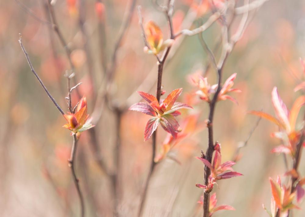 Photo en gros plan de jeunes feuilles multicolores au printemps.