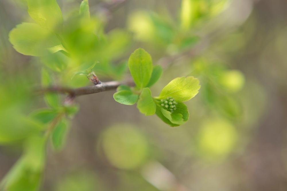 Photo en gros plan d'une plante verte d'extérieur.