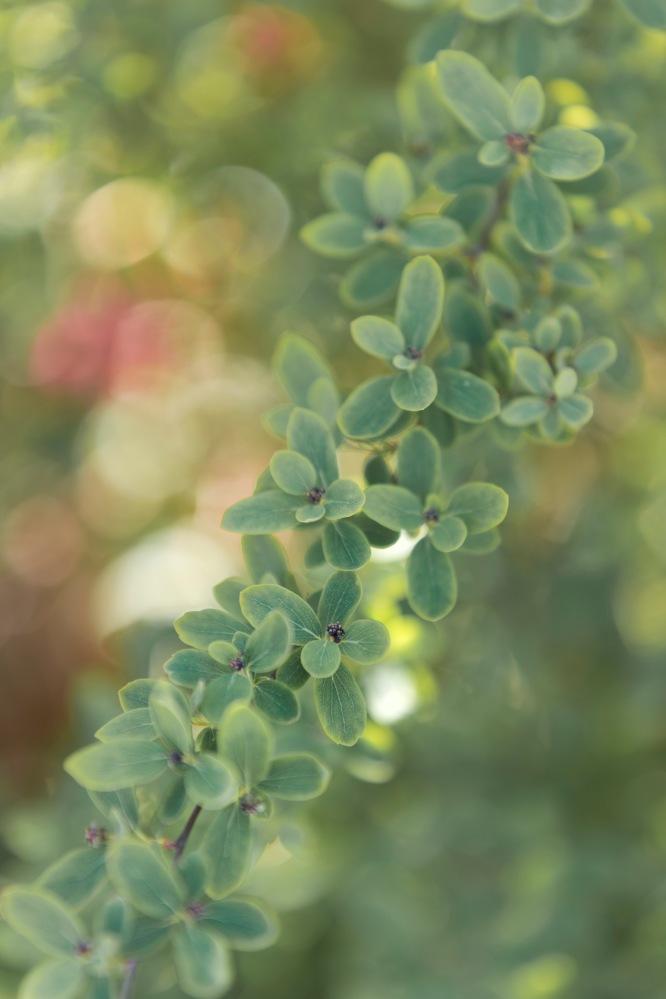 Photo d'un feuillage vert au printemps.